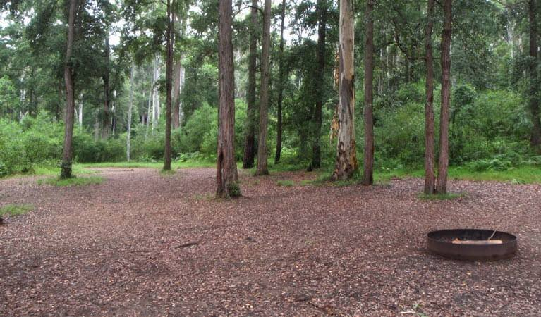 Murphys Glen campground, Blue Mountains National Park. Photo: Arthur Henry/NSW Government